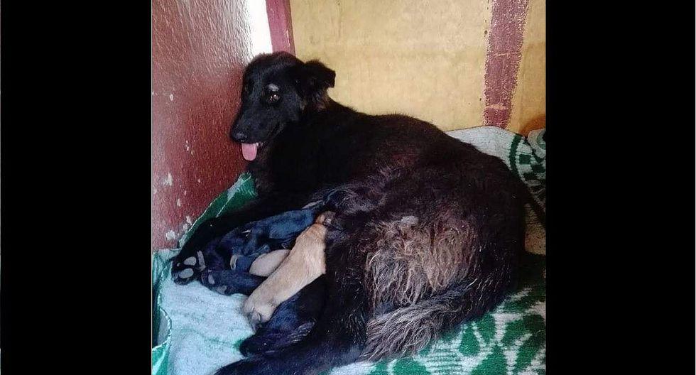 Perrita dio su vida para salvar a sus dueños del sismo