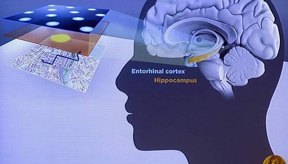 Descubren que cerebro humano cuenta con una especie de GPS interno