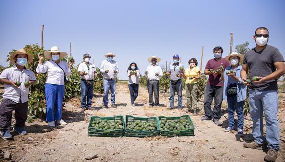 Se han atendido casi 3000 hectáreas dedicadas a este cultivo en las regiones Junín, Ica, Huancavelica, Arequipa, Moquegua, Apurímac, entre otras. (Foto: Midagri)