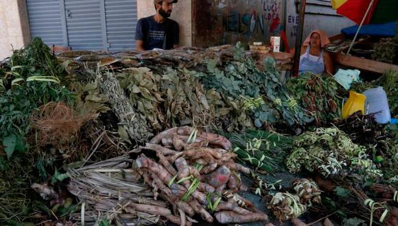 Plantas medicinales irrumpen contra dengue, chikunguña y zika