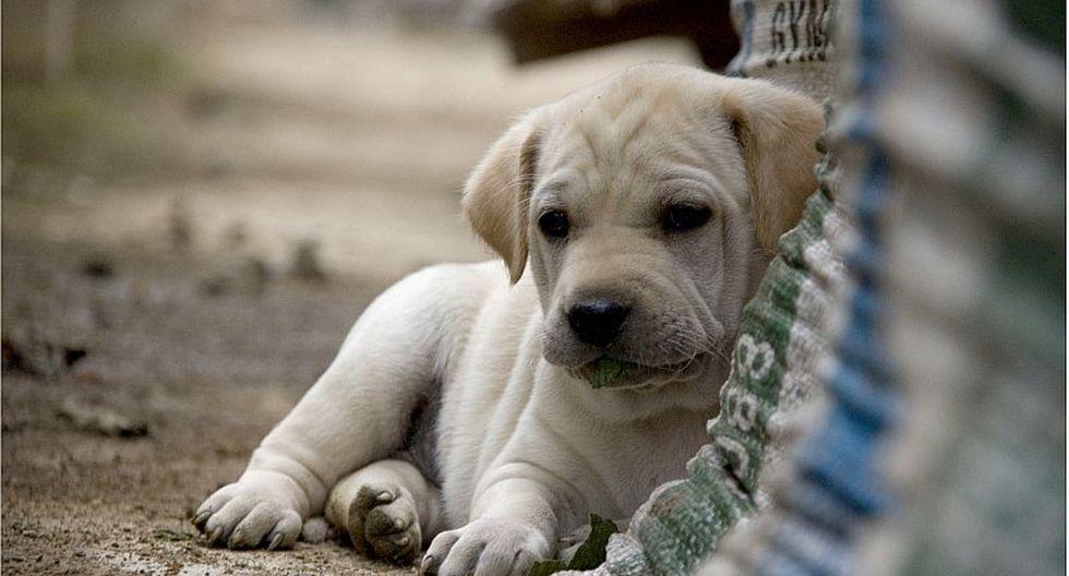 6 pasos a seguir si te encuentras una mascota abandonada