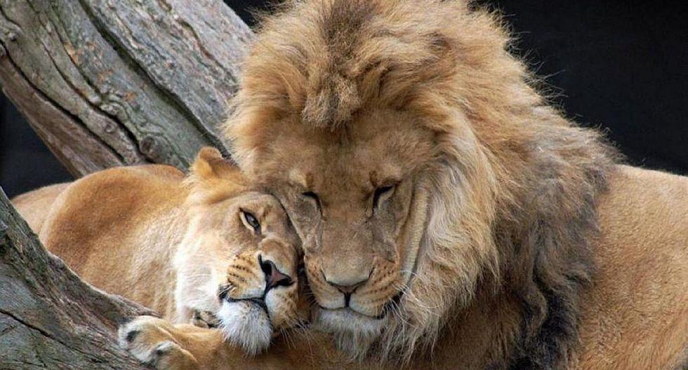 Matan a leona y león porque el último mató a su dueño en zoo ilegal
