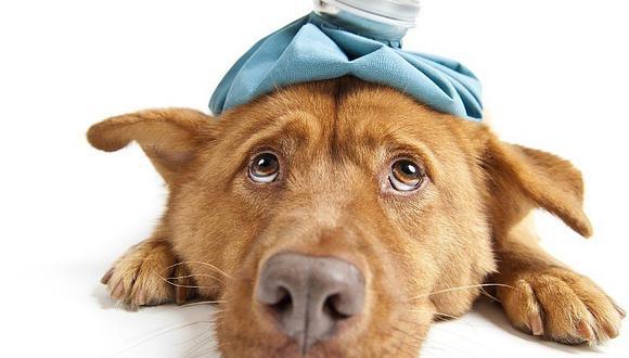 Lo que debe contener un kit de primeros auxilios de la mascota
