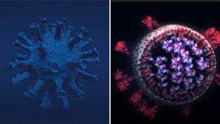 COVID-19: Descubre la primera foto verdadera del virus