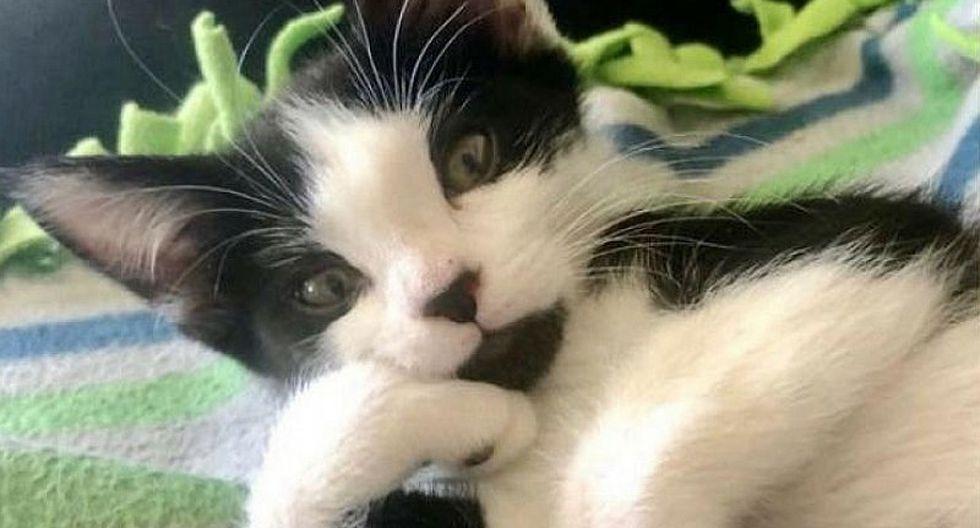 Conoce la tierna historia de un gato que se curó gracias al amor