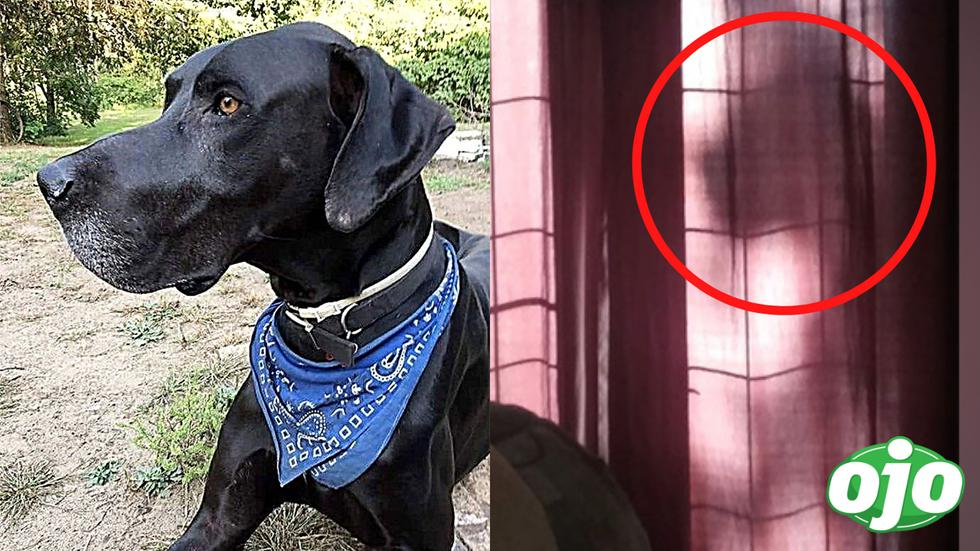 En el 2018, Michelle Creighton afirmó haber visto la sombra de su gran danés detrás de las cortinas de su sala, incluso tomó un par de fotografías para probarlo. Lo curioso es que su perro había fallecido semanas antes y su muerte aún le provocaba un profundo dolor. Pero cuando vio el fantasma de su tan querida mascota, supo que Oakley la había visitado para demostrarle que siempre estaría con ella.