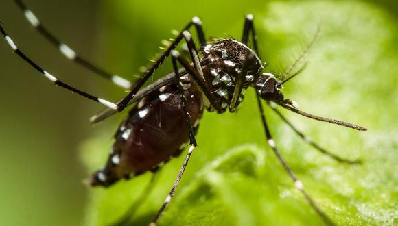 Los insectos invasores cuestan 77.000 millones de dólares anuales