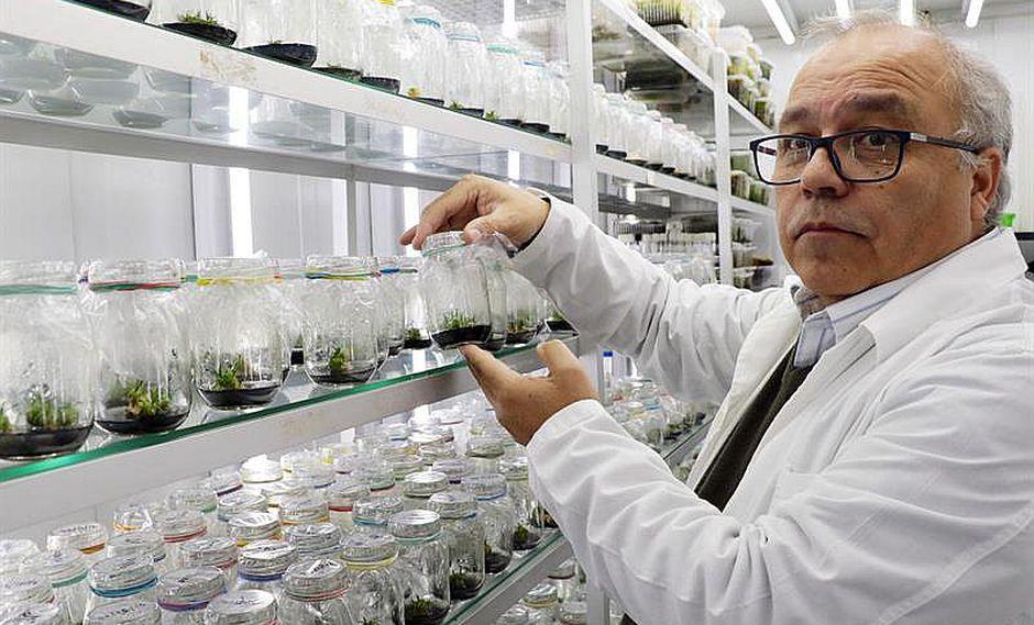 Descubren planta antártica que servirá de bloqueador solar para humanos