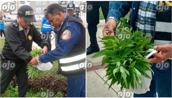San Miguel: hallan plantaciones de marihuana en parque (FOTOS)