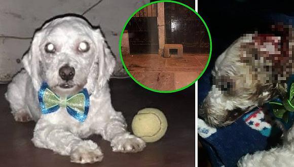 Sujeto golpeó salvajemente a perrito que entró a su casa hasta causarle la muerte