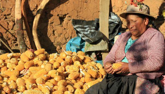 Huancavelica: pobladores de Pichus mantienen cero casos COVID-19 y sobreviven a la pandemia a puro maíz (Foto cortesía: Junior Meza)
