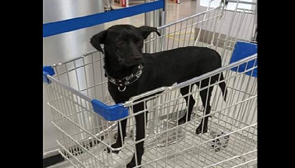 Perrito es abandonado por dos personas en coche de tienda (FOTO)