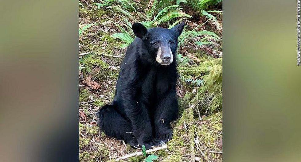 Asesinan a inocente oso porque era cariñoso y amistoso con la gente │VIDEO